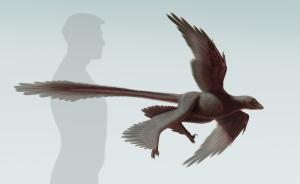Changyuraptor_S.-Abramowicz