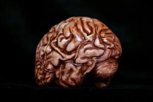 brain__87938.1409519680.1280.1280