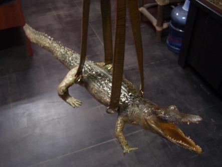 alligator bags23