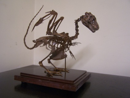 baby dragon skeleton 90